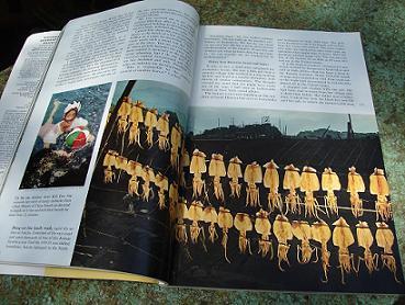 Tintenfisch in Südkorea - National Geographic